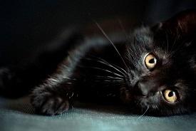 چرا گربه سیاه نماد بدشانسی است؟!