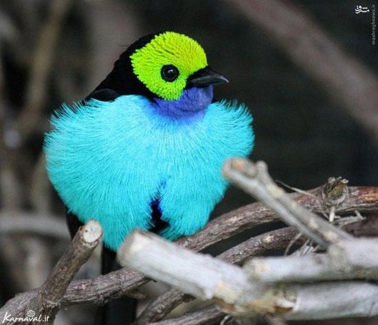 10 گونه از زیباترین پرنده های جهان (+عکس)