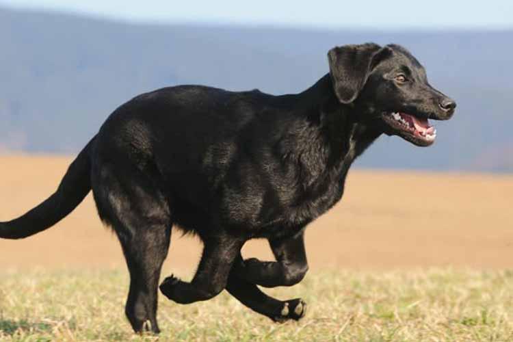 چگونه سگ ها بدون جیپیاس مسیریابی میکنند؟