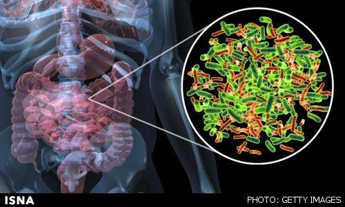 خستگی مزمن و ارتباط آن با میکروبهای روده