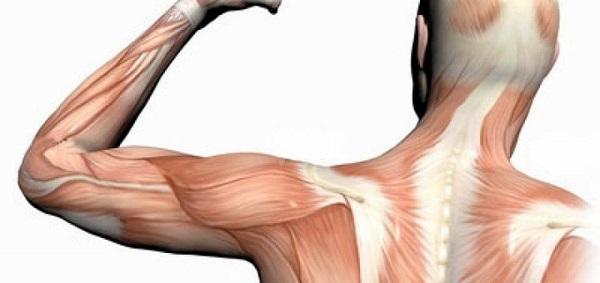 تاثیرات افزایش سن بر عضلات