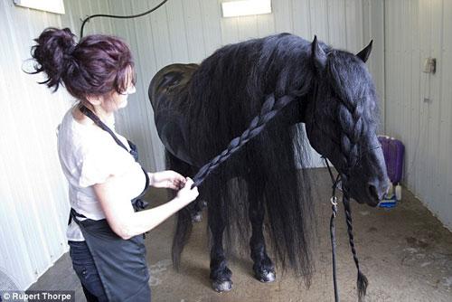 فردریک، زیباترین اسب جهان (+عکس)