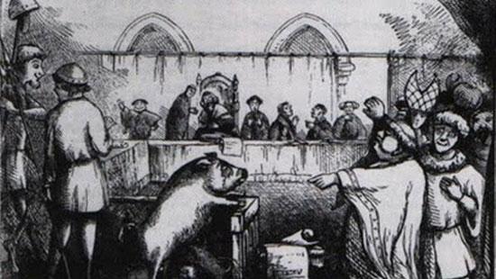 موارد عجیب از محاکمه حیوانات در تاریخ
