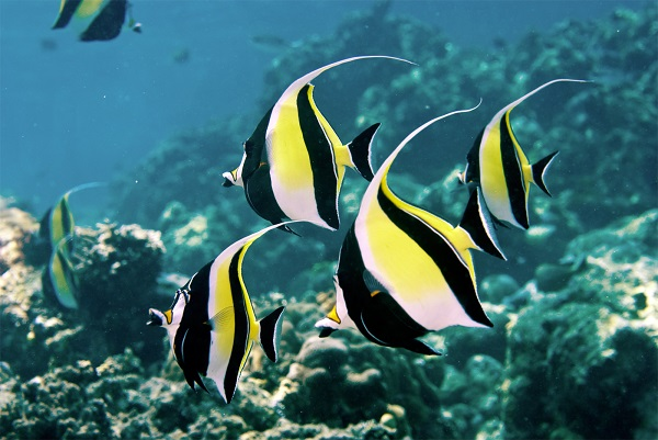 آیا ماهی ها هم احساس دارند؟