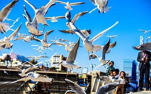 پرندگان در شهرها خشمگین تر هستند
