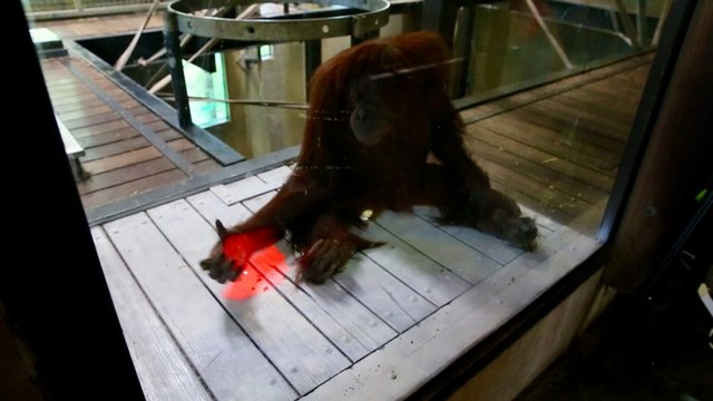 ایکسباکس بازی میمونها را ببینید+تصاویر