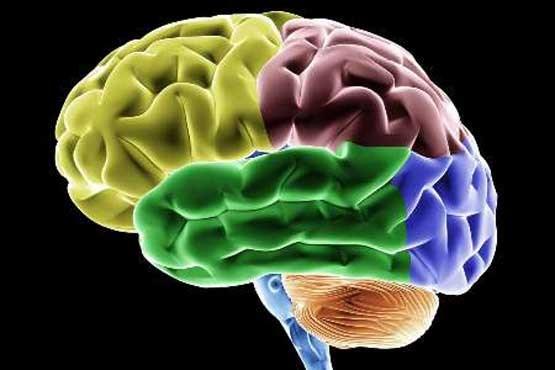 رشد فوق العاده مغز در چه سنی صورت می گیرد؟