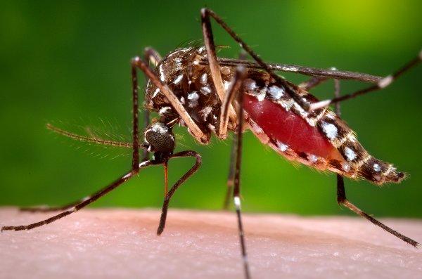 آلوده شدن عجیب اسپرم به ویروس زیکا