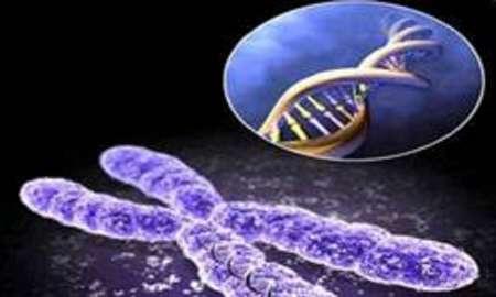 ژن درمانی افقی جدید در درمان بیماریهای ژنتیکی