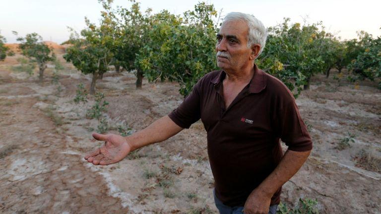 خشک شدن باغ های پسته در کرمان