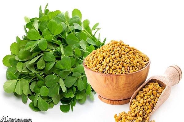 شنبلیله؛ گیاهی با فواید سلامت شگفت انگیز