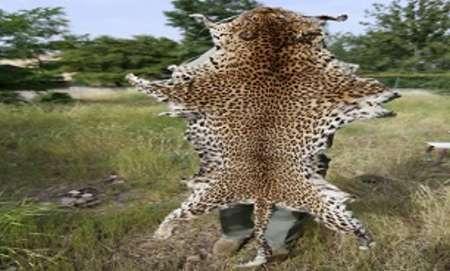 تبلیغ پوست پلنگ روی سایت دیوار، کار دست شکارچی غیر مجاز داد