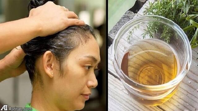 معجزه برگهای یک گیاه گرمسیری در توقف ریزش مو