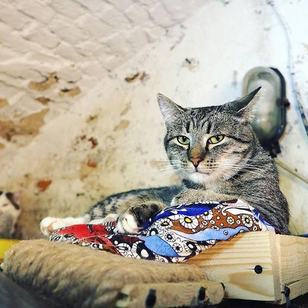 ماجرای تنها رییس جمهور گربه دنیا (+عکس)
