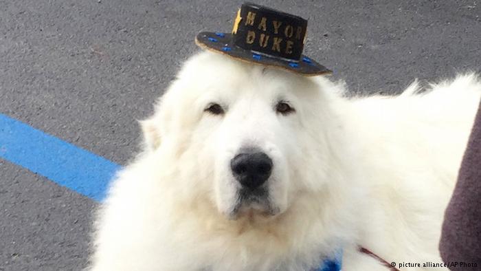 این سگ شهردار دهکده ای در آمریکا شد (+عکس)