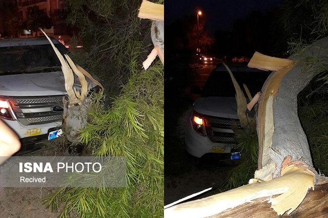 سقوط درخت روی فورد در کیش (+عکس)