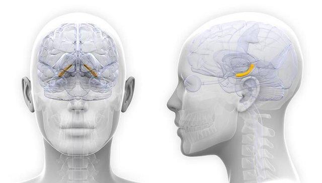 مغز زنان در دوره قاعدگی رشد میکند!
