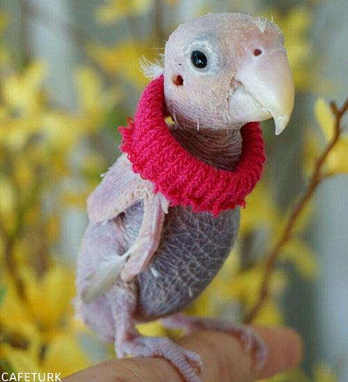 بانمک ترین مرغ عشقی که تا به حال دیده اید! (+عکس)