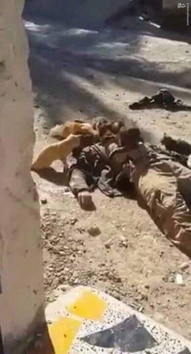 جنازه یک داعشی خوراک گربهها شد (+عکس)