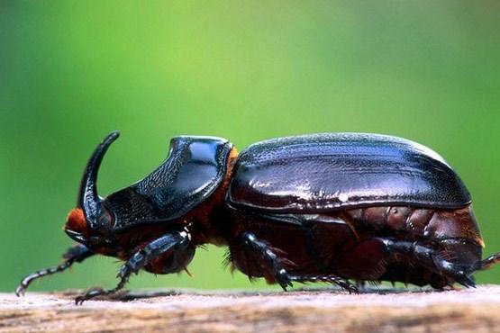 رکورد داران حیات وحش (+عکس)