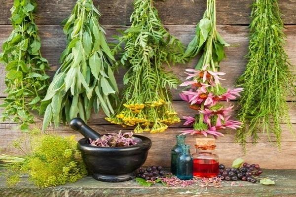 نسخه گیاهی برای تقویت کبد و سیستم ایمنی