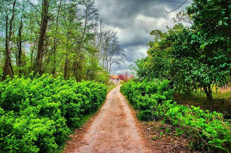 طبیعت زیبای صفرا بسته گیلان (عکس)