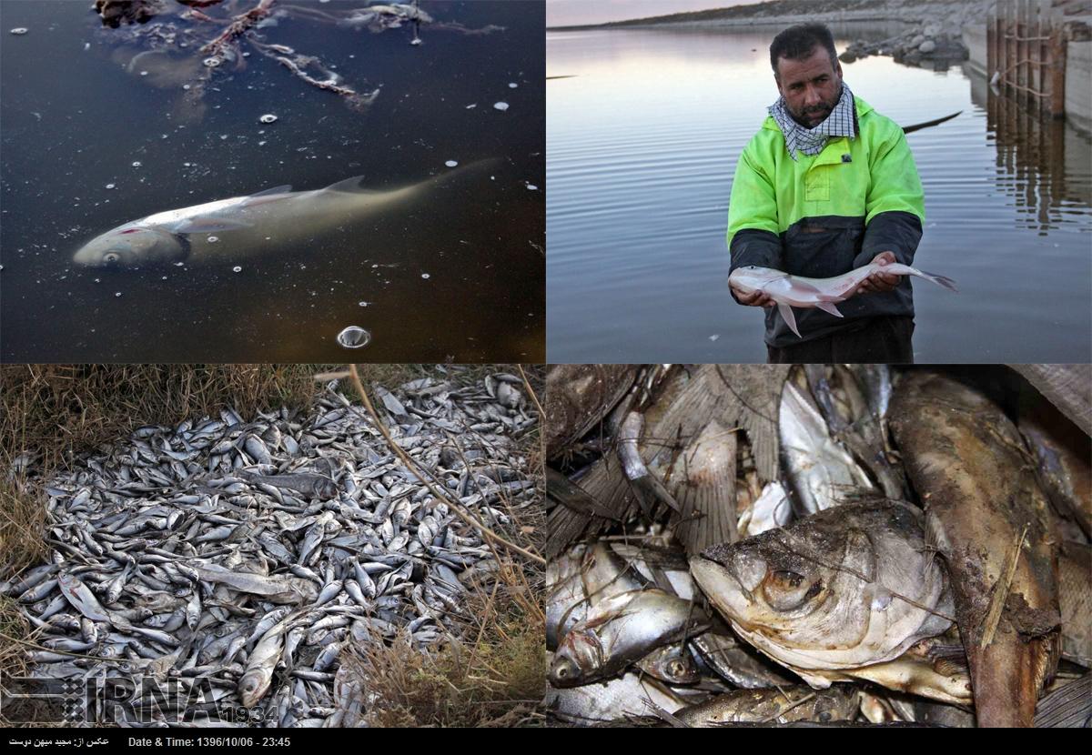 تلف شدن هزار قطعه ماهی در سد وشمگیر گلستان (+عکس)