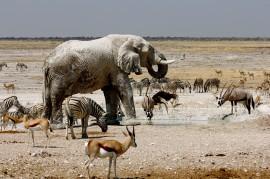 تجربه گردشگری پايدار ناميبيا (+عکس)