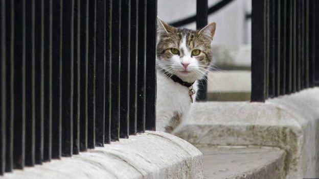 روایت بعیدینژاد از گربههای دیپلمات در انگلستان
