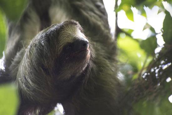 کندترین حیوانات روی زمین (+عکس)