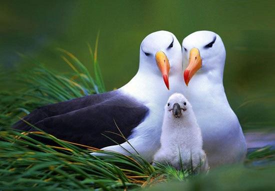 عشق و وفاداری در دنیای حیوانات