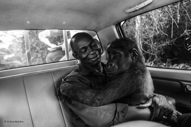 گوریل خندان و تنبل آویزان/ خوب ترین عکسهای حیات وحش