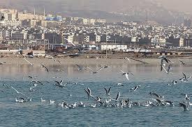 نوع آنفلوآنزای لاشه پرندگان دریاچه چیتگر مشخص شد