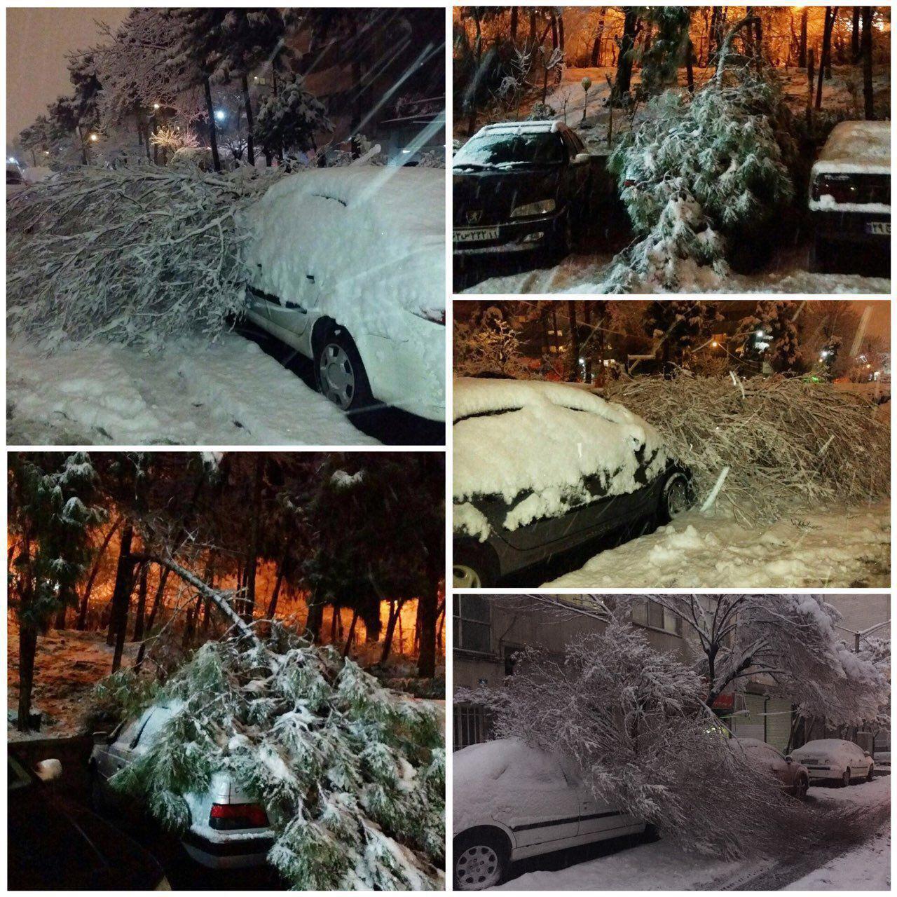 سقوط درخت روی خودروها بر اثر شدت بارش برف در تهران (عکس)