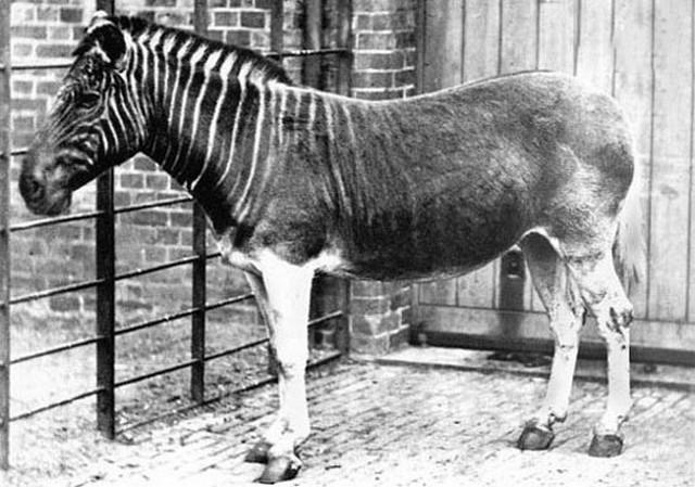 شگفت انگیزترین حیوانات منقرض شده (+عکس)