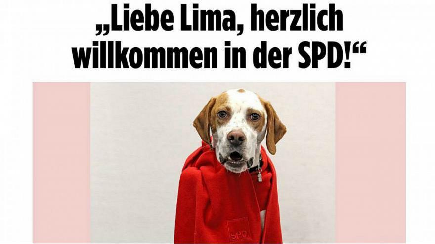 این سگ نامزد انتخابات آلمان شد (+عکس)