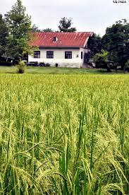 تغییر کاربری مزرعه و باغ به ویلا بدون اخذ مجوز ممنوع است