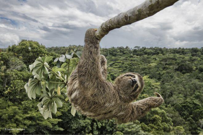 گوریل خندان و تنبل آویزان؛ بهترین عکسهای حیات وحش