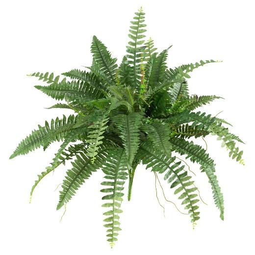 گیاهان موثر در رفع آلودگی هوا را بیشتر بشناسید (+عکس)