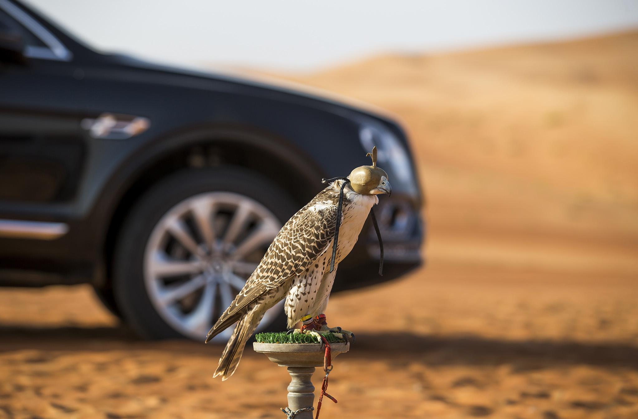 بنتایگا بنتلی برای پرندگان اشرافی