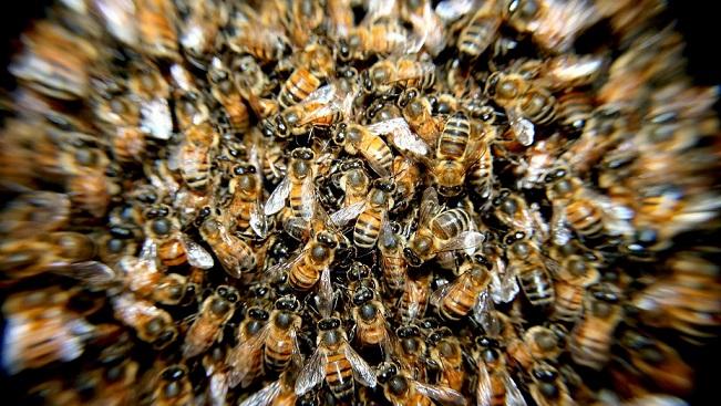 حمله هزاران زنبور به نیسان جوک
