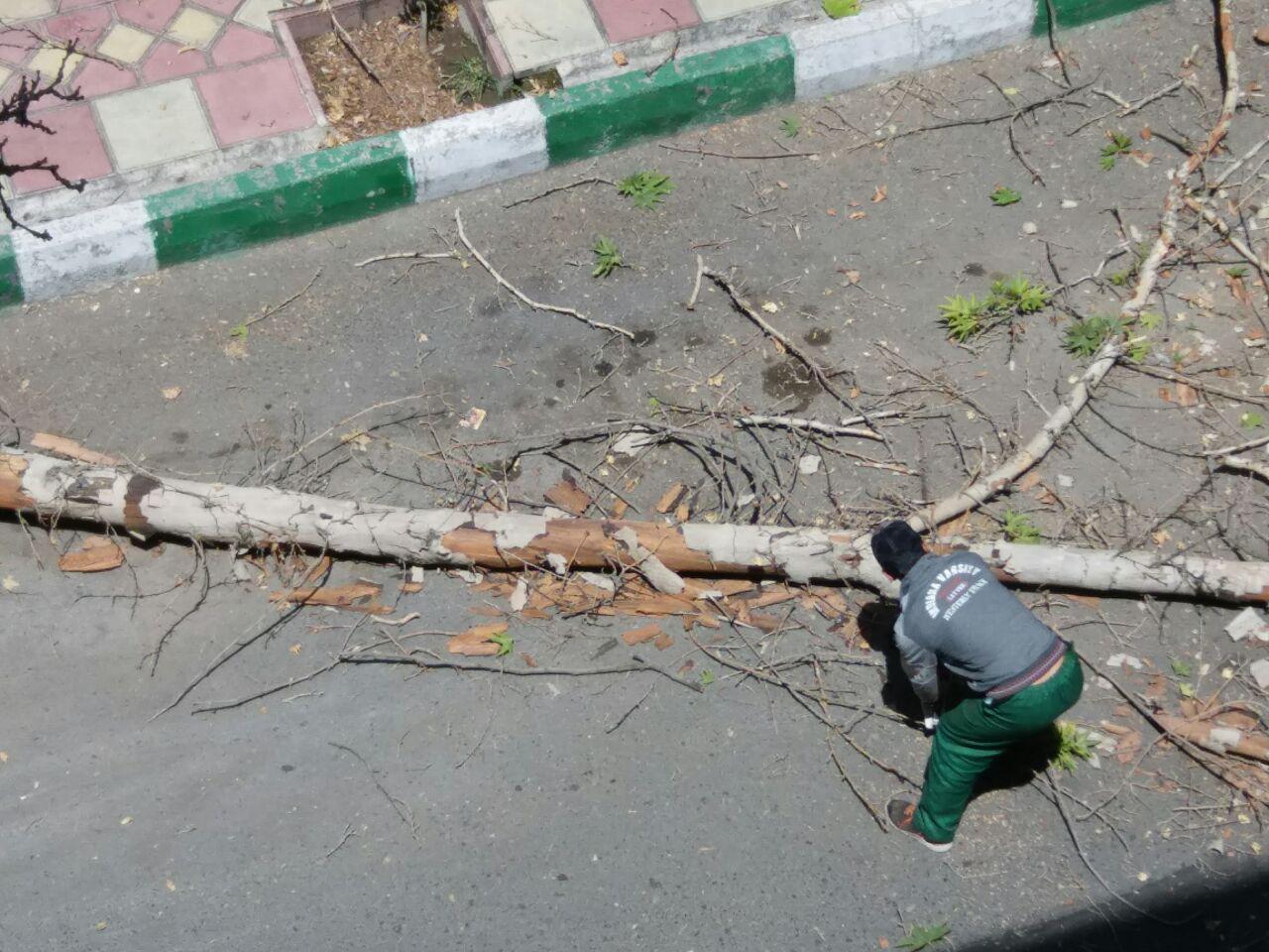 اینجا یک درخت دیگر به قتل رسید!