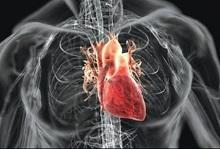 قلب مینیاتوری انسان ساخته شد