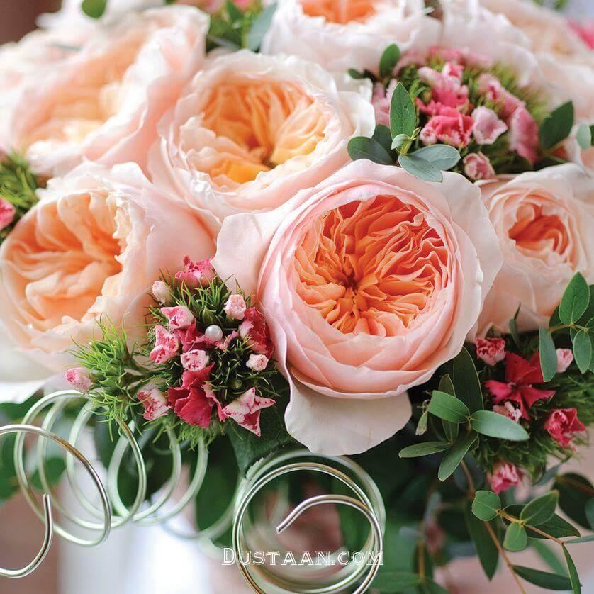 رز ژولیت، گرانترین گل جهان (عکس)
