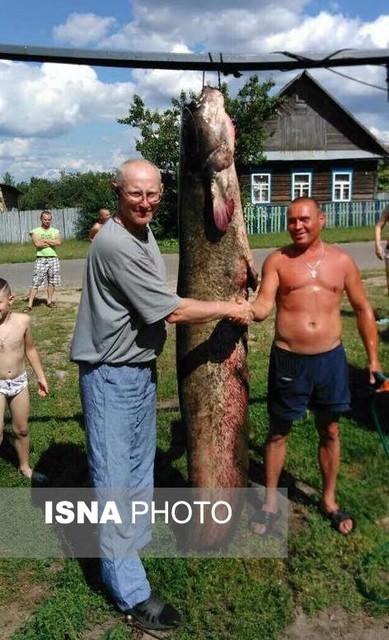صید ماهی 102 کیلوگرمی در بلاروس (+عکس)