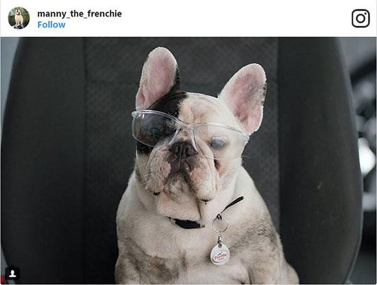 سگهایی که در اینستاگرام درآمد بالایی دارند (+عکس)