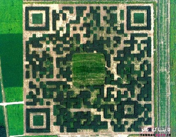 ساخت بارکد غول پیکر از درختان (+عکس)