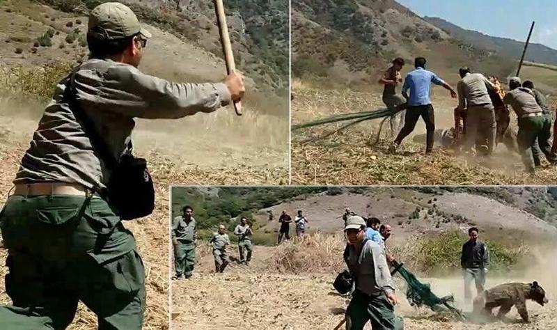 برخورد با عاملان قتل خرس در گلستان؛ حل مسئله یا پاک کردن صورت مسئله؟