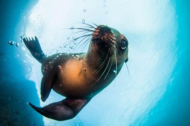 بازی شیر دریایی با حباب (عکس)