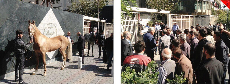 کورس «اسب»ها جلوی در وزارتخانه/ فدراسیون قاطر را جای اسب تأیید کرد!